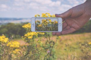 スマホで花を撮影する人