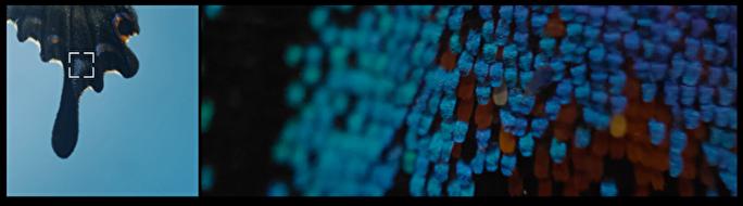 OPPO Find X3 Pro顕微鏡カメラ画像